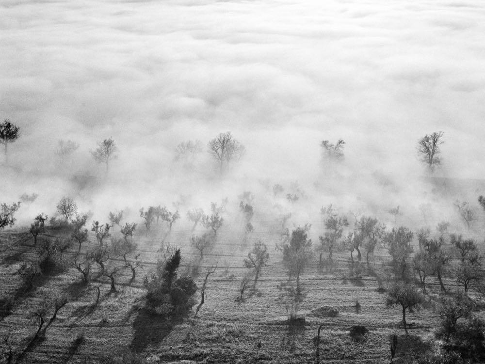 nebbia nell'oliveto Assisi 1958_E0000398_ElioCiol©